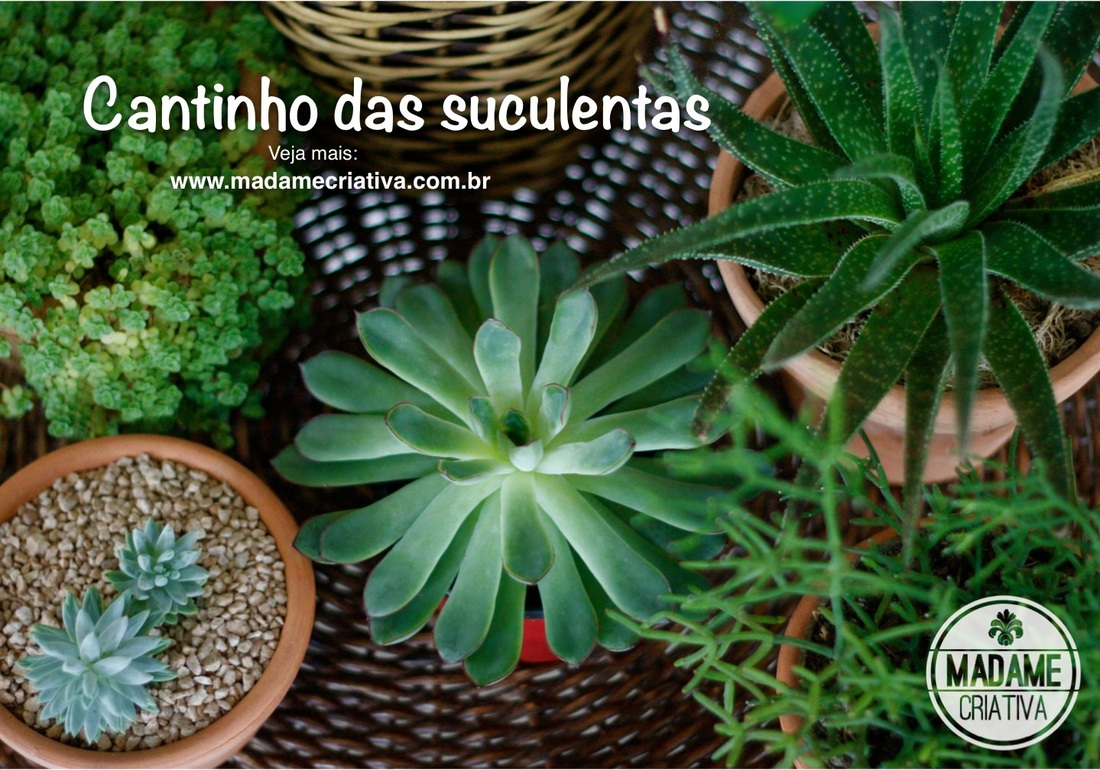 Como cultivar suculentas-  Passo a passo com fotos - How to grow juicy plants - DIY tutorial  - Madame Criativa - www.madamecriativa.com.br